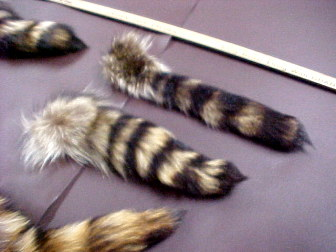 Racoon Tails, Fur tails for sale free shipping